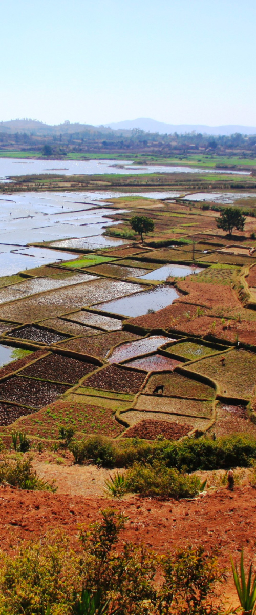annuaire-agriculture-elevage-peche-Cameroun
